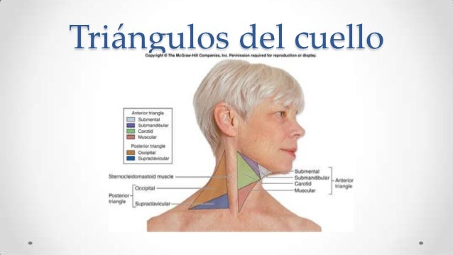 Duele la espalda en el campo de los riñones el tratamiento