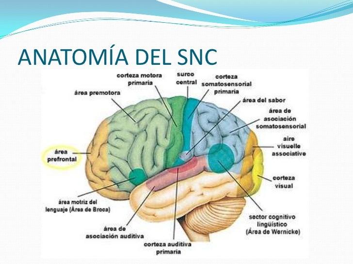 is testosterone propionate safe