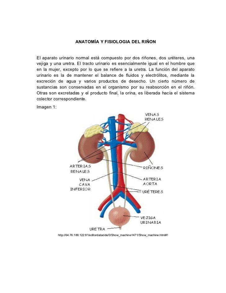 laboratorio clínico: PRUEBAS DE FUNCION RENAL