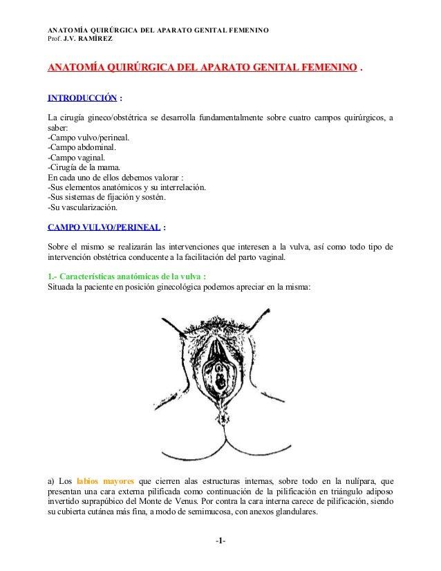 ANATOMÍA QUIRÚRGICA DEL APARATO GENITAL FEMENINOProf. J.V. RAMÍREZANATOMÍA QUIRÚRGICA DEL APARATO GENITAL FEMENINO .INTROD...