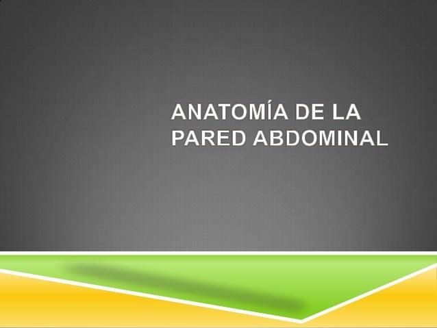 PARED DEL ABDOMEN  Limites:  Superior:  Apófisis xifoides  Bordes costales  Posterior:  Columna vertebral  Inferior...