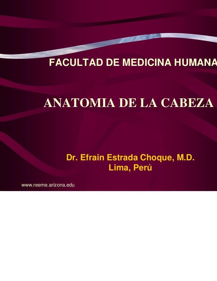 FACULTAD DE MEDICINA HUMANA        ANATOMIA DE LA CABEZA                 Dr. Efrain Estrada Choque, M.D.                  ...