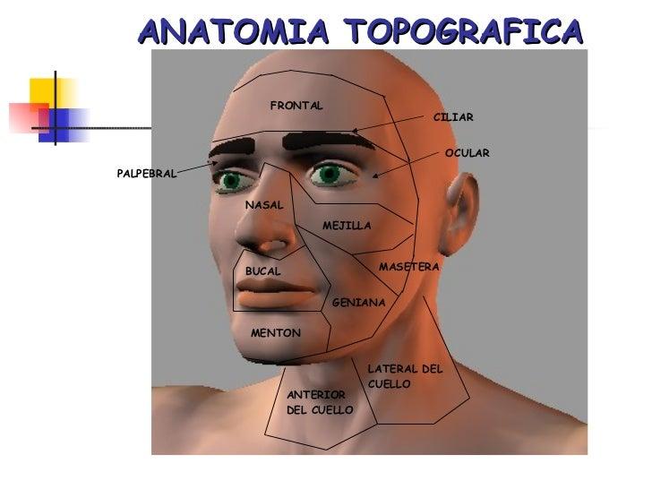 Anatomía Humana.: Definición y las ramas de la \