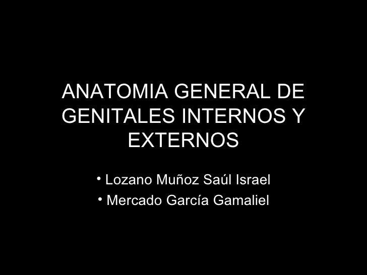 ANATOMIA GENERAL DE GENITALES INTERNOS Y EXTERNOS <ul><li>Lozano Muñoz Saúl Israel </li></ul><ul><li>Mercado García Gamali...