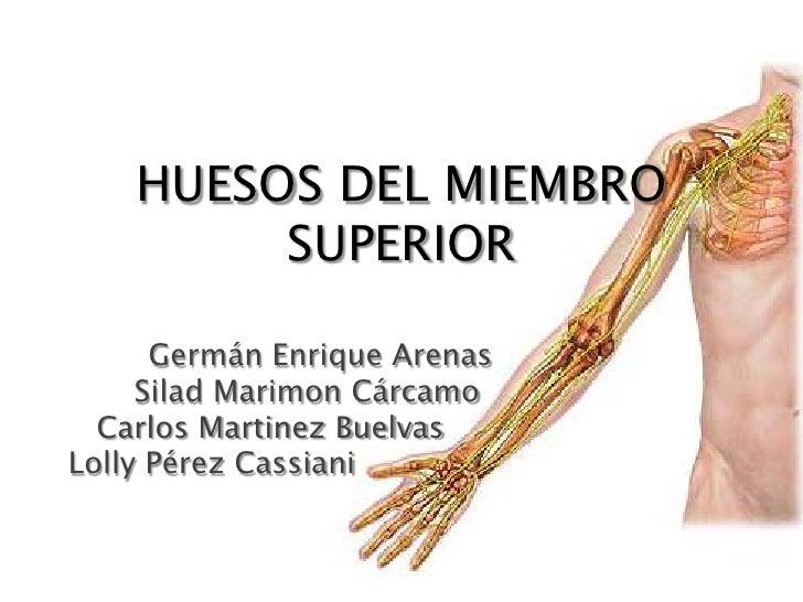 HUESOS DEL MIEMBRO SUPERIOR<br />Germán Enrique Arenas<br />       Silad Marimon Cárcamo<br />   Carlos Martinez Buelvas<...
