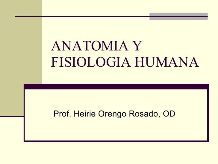ANATOMIA Y FISIOLOGIA HUMANA Prof. Heirie Orengo Rosado, OD