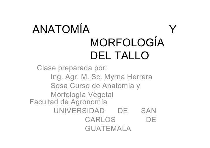 ANATOMÍA Y MORFOLOGÍA DEL TALLO  Clase preparada por:  Ing. Agr. M. Sc. Myrna Herrera Sosa Curso de Anatomía y Morfología ...