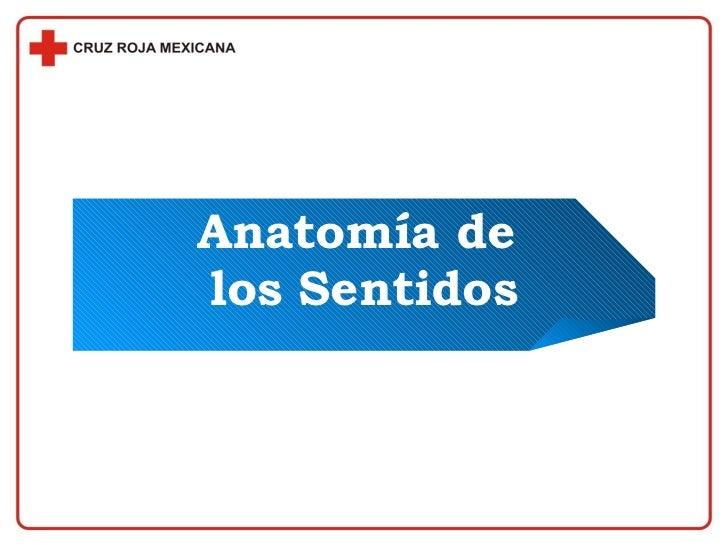 Anatomiade Los Sentidos