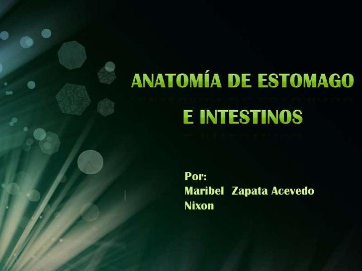 Anatomía de estomago e intestinos<br />Por:<br />Maribel  Zapata Acevedo<br />Nixon<br />