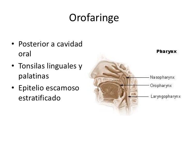Orofaringe Posting 244... Shia Labeouf
