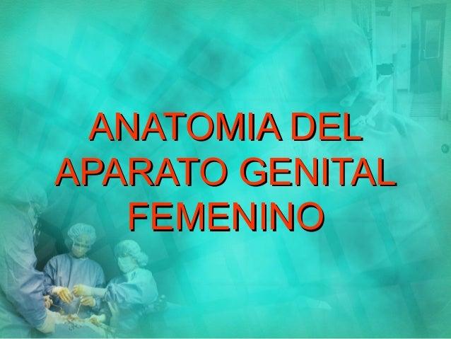 Anatomia del genital femenino