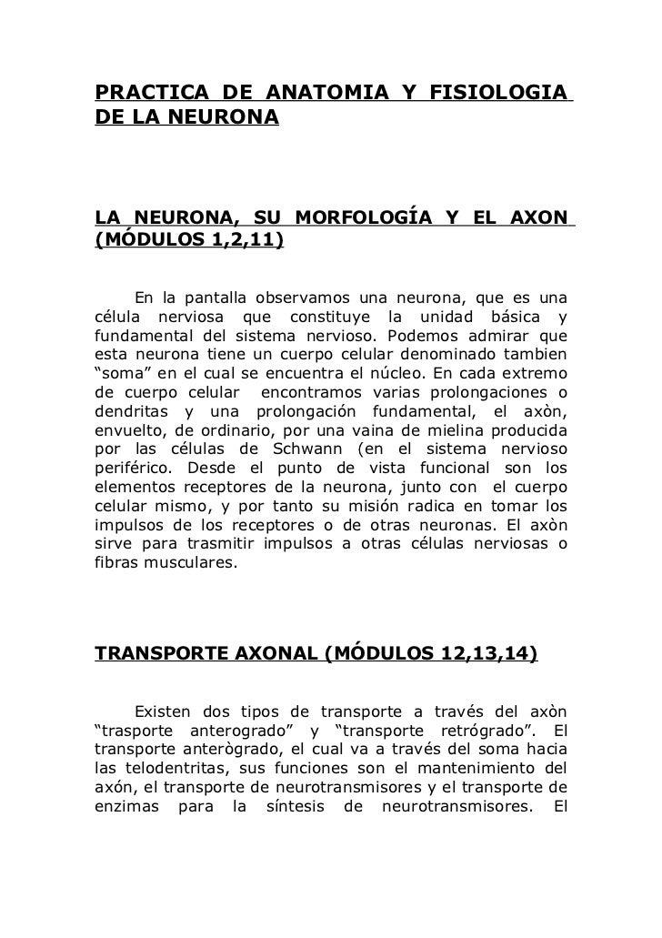 PRACTICA DE ANATOMIA Y FISIOLOGIADE LA NEURONALA NEURONA, SU MORFOLOGÍA Y EL AXON(MÓDULOS 1,2,11)     En la pantalla obser...