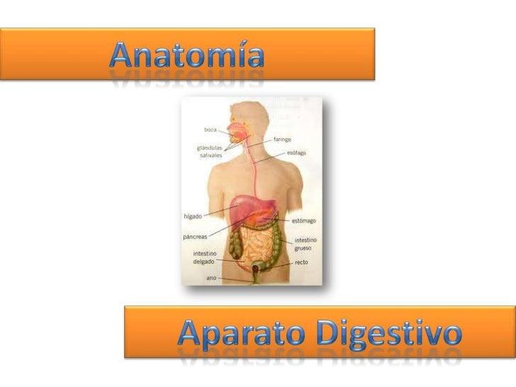 Aparato digestivo    Conjunto de órganos    Proceso de digestiónTransformación de alimentos       Mejor absorción