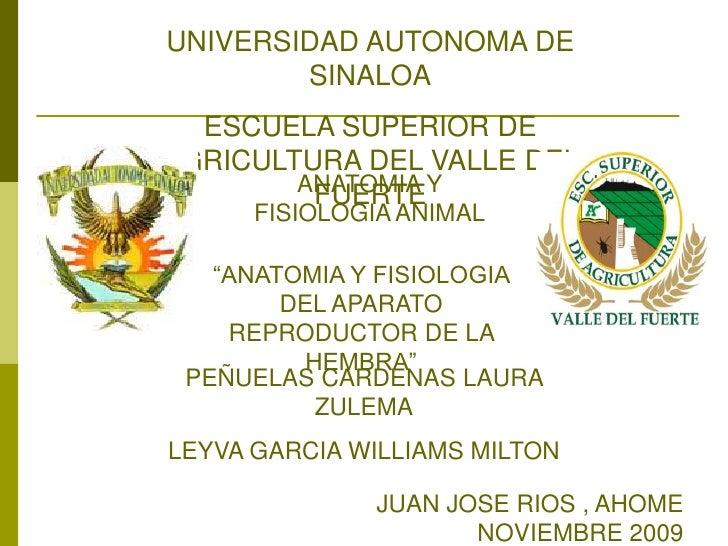 UNIVERSIDAD AUTONOMA DE SINALOA<br />ESCUELA SUPERIOR DE AGRICULTURA DEL VALLE DEL FUERTE<br />ANATOMIA Y FISIOLOGIA ANIMA...