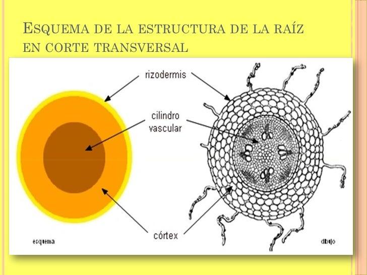 La Lagartera furthermore Oscar D Leon Oscar 86 Frontal likewise Anatomia De La Raiz moreover 67948658 moreover oscarflores. on oscar de leon a el