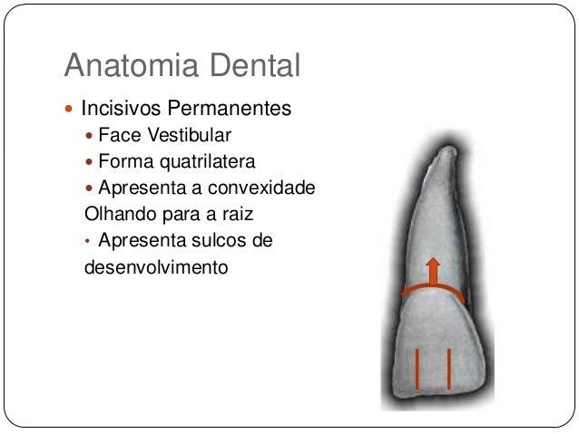 humana dental insurance reviews