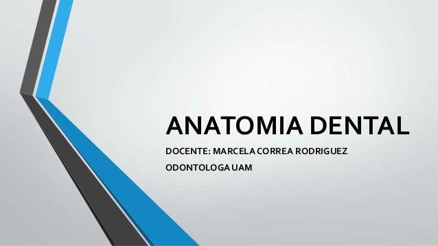ANATOMIA DENTAL DOCENTE: MARCELA CORREA RODRIGUEZ ODONTOLOGA UAM