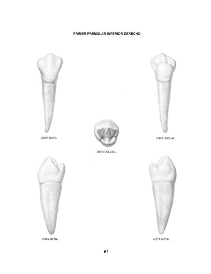 Anatomia Dentaria Figun Descargar Download