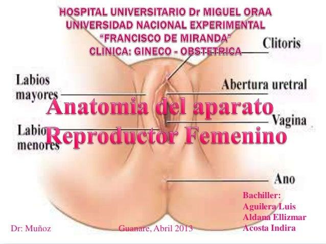 Dr: Muñoz  Guanare, Abril 2013  Bachiller: Aguilera Luis Aldana Ellizmar Acosta Indira