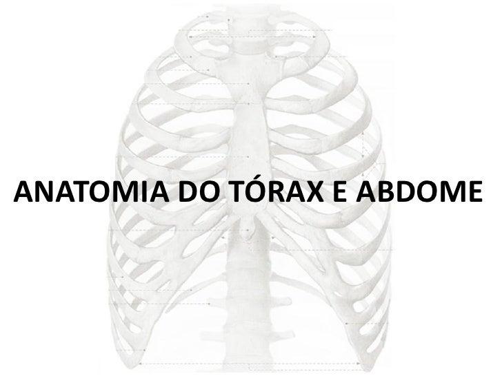 ANATOMIA DO TÓRAX E ABDOME