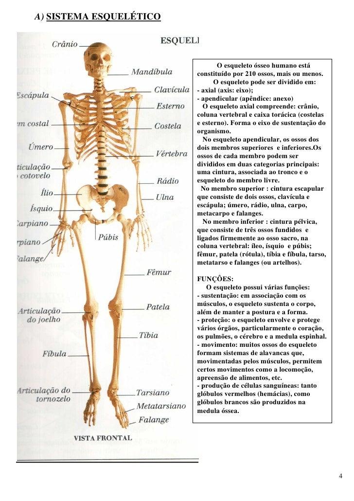 corpo umano apparato riproduttore