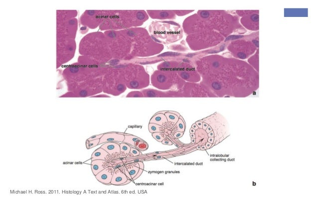 Ross histology Pdf Free Ross and Wilson Human Anatomy and Physiology ...