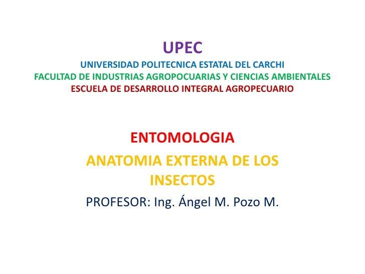 Anatomia externa de los insectos