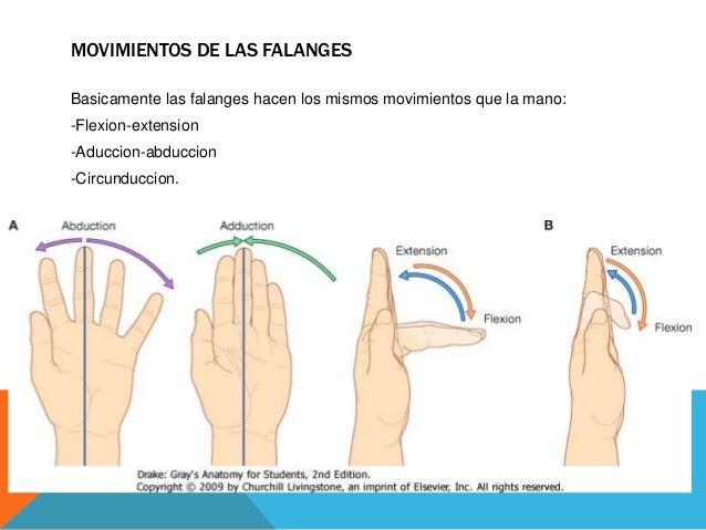 Los ungüentos de la várice varicosa los foros