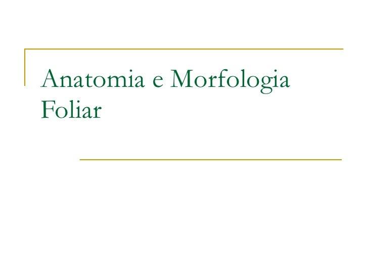 Anatomia e Morfologia Foliar