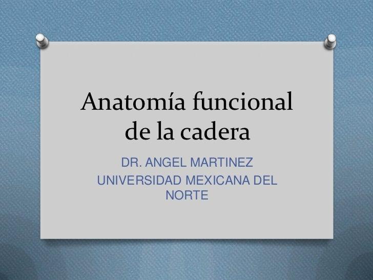 Anatomía funcional   de la cadera    DR. ANGEL MARTINEZ UNIVERSIDAD MEXICANA DEL          NORTE