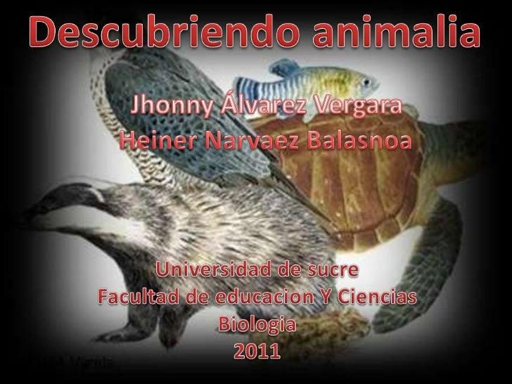 Descubriendo animalia<br />Jhonny Álvarez Vergara<br />Heiner Narvaez Balasnoa<br />Universidad de sucre<br />Facultad de ...