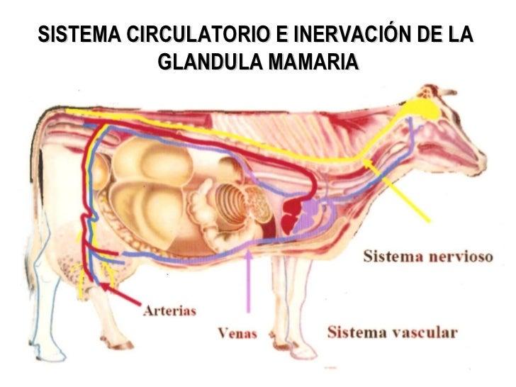 La anatomía la presencia del párvulo - Bullets & Candies - SiscoBoy ...