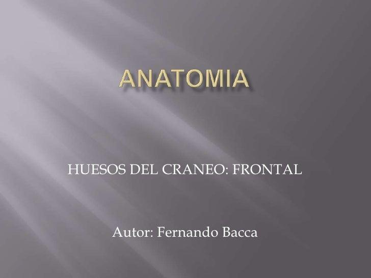 ANATOMIA<br />HUESOS DEL CRANEO: FRONTAL<br />Autor: Fernando Bacca<br />