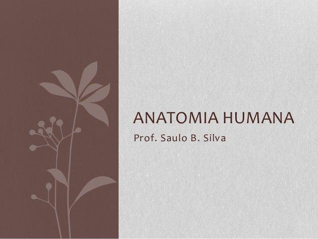 ANATOMIA HUMANA Prof. Saulo B. Silva