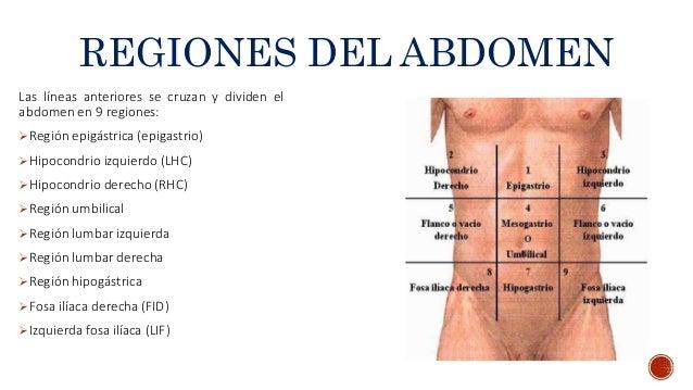 Anatomia Peritoneo Y Cavidad Abdominal