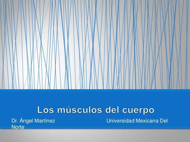 Dr. Ángel MartínezUniversidad Mexicana Del Norte<br />Los músculos del cuerpo<br />