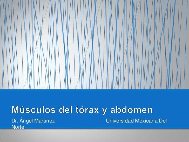 Dr. Ángel Martínez Universidad Mexicana Del Norte<br />Músculos del tórax y abdomen<br />