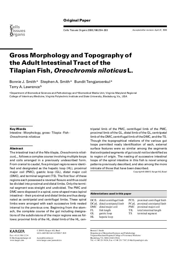 Original PaperCells Tissues Organs 2000;166:294–303Gross Morphology and Topography ofthe Adult Intestinal Tract of theTila...