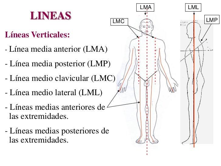 ANATOMÍA TOPOGRAFICA - MEDICINA LEGAL Y CRIMINALISTICA 1409
