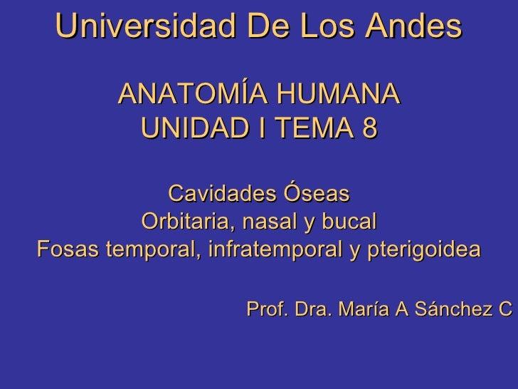 Anatomia Tema 8