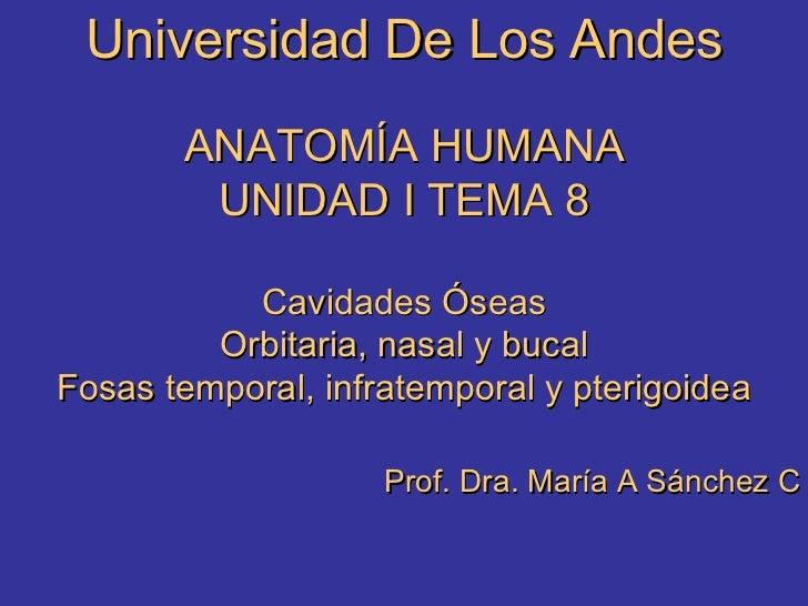 Universidad De Los Andes ANATOMÍA HUMANA UNIDAD I TEMA 8 Cavidades Óseas Orbitaria, nasal y bucal Fosas temporal, infratem...