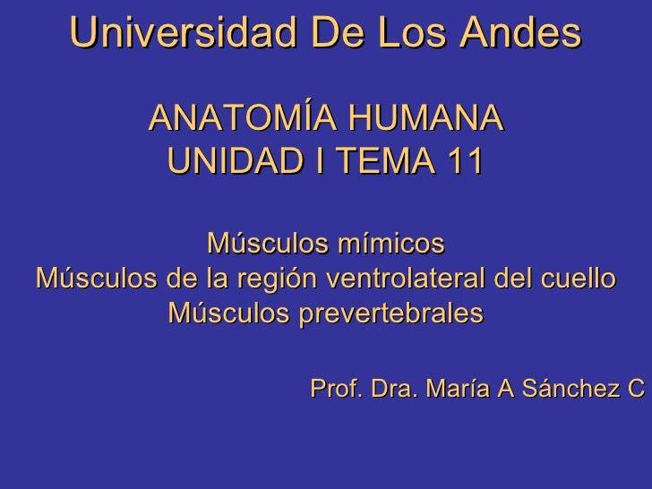 Universidad De Los Andes ANATOMÍA HUMANA UNIDAD I TEMA 11 Músculos mímicos Músculos de la región ventrolateral del cuello ...