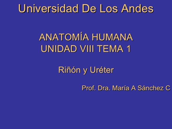 Universidad De Los Andes ANATOMÍA HUMANA UNIDAD VIII TEMA 1 Riñón y Uréter Prof. Dra. María A Sánchez C