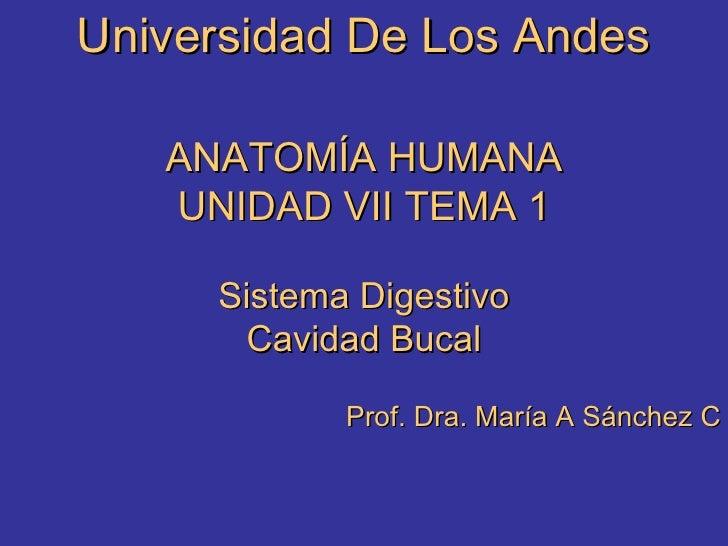 Universidad De Los Andes ANATOMÍA HUMANA UNIDAD VII TEMA 1 Sistema Digestivo Cavidad Bucal Prof. Dra. María A Sánchez C