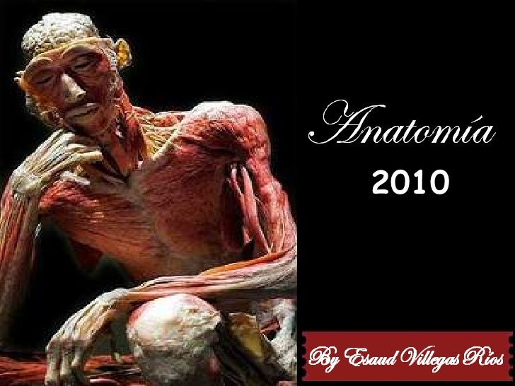 Anatomia Verano 2010 Slid