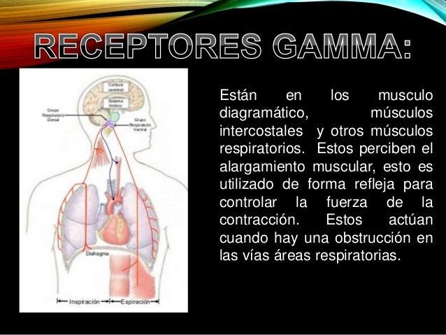 cristancho fisiologia respiratoria pdf