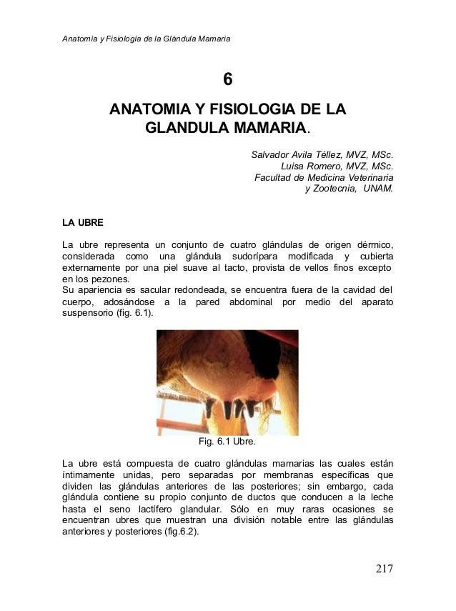 Anatomía y Fisiología de la Glándula Mamaria                                          6            ANATOMIA Y FISIOLOGIA D...