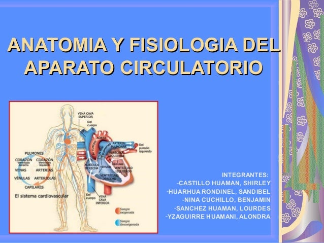 fisiologia aparato circulatorio: