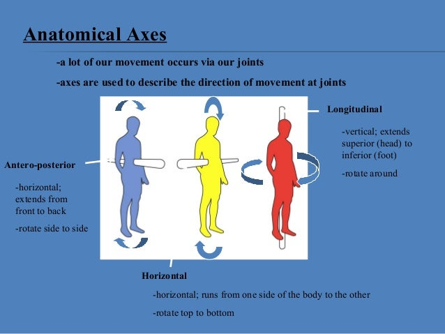 Relative positions anatomy
