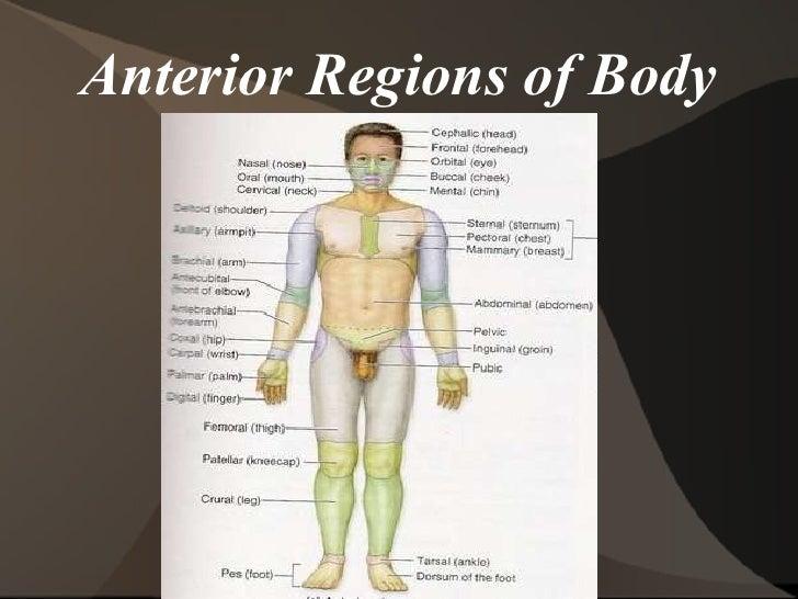 LABORATORY EXERCISE 2 BODY ORGANIZATION AND TERMINOLOGY